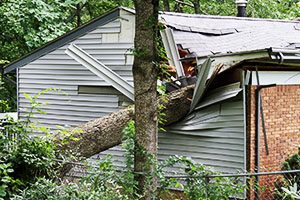 APLC-Fallen-Tree-Damage-claims-Wehandleinsuranceclaims.com